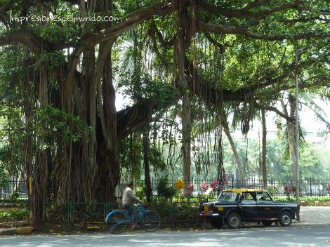 Arbol en Bombay