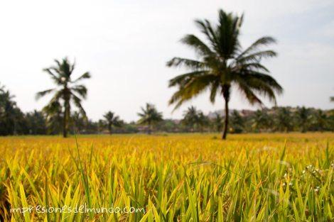 arrozales-Hampi-impresiones-del-mundo