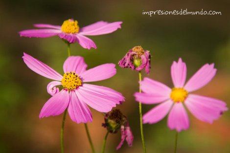 flores-Hampi-impresiones-del-mundo