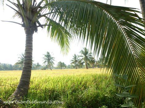 palmera-Hampi-impresiones-del-mundo