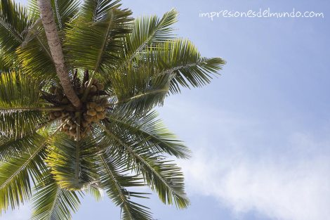 palmera-Palolem-Impresiones-del-mundo