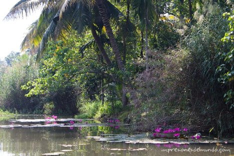 backwaters-1-Kerala-impresiones-del-mundo