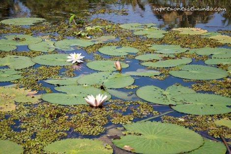 backwaters-10-Kerala-impresiones-del-mundo