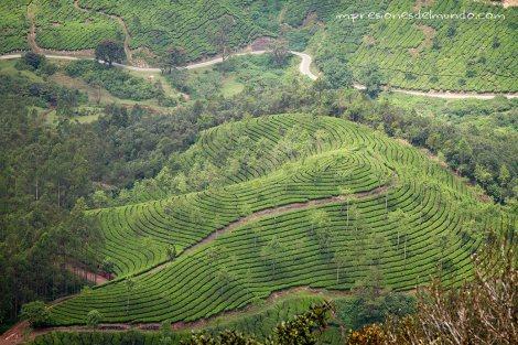 campos-de-te4-Munnar-impresiones-del-mundo