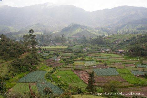 cultivos-Munnar-impresiones-del-mundo