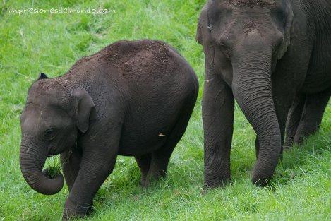 elefantes-Munnar-impresiones-del-mundo
