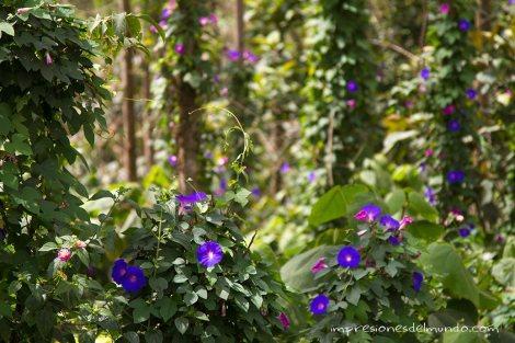 flores-2-Munnar-impresiones-del-mundo