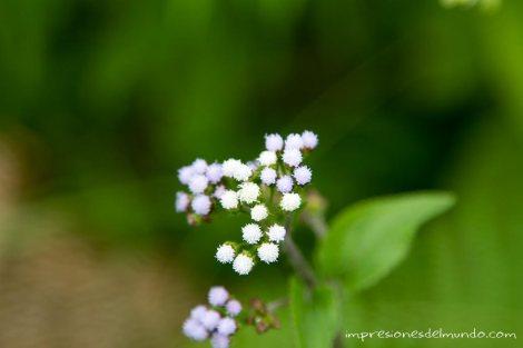 flores-Munnar-impresiones-del-mundo
