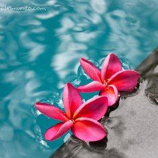 Kochi-flores-impresiones-del-mundo