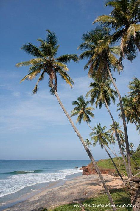 palmeras-Varkala-impresiones-del-mundo