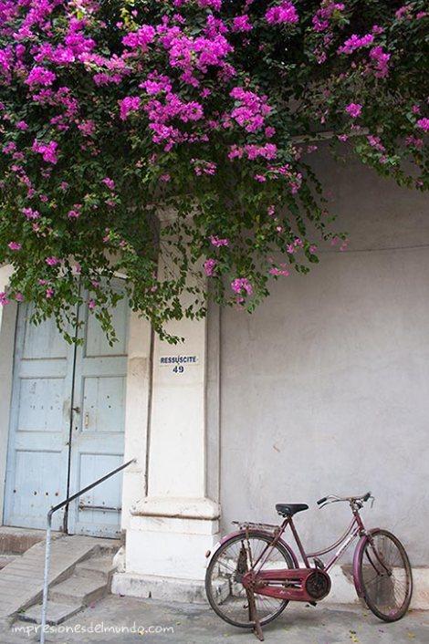 bicicleta-y-flores-pondicherry-impresiones-del-mundo
