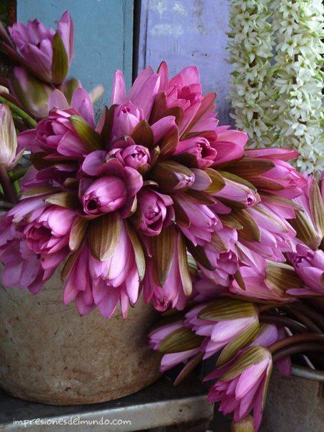 flores-pondicherry-impresiones-del-mundo