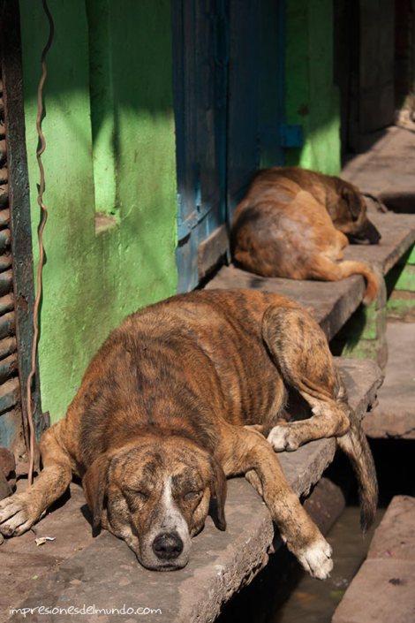 siesta-perros2-impresiones-del-mundo