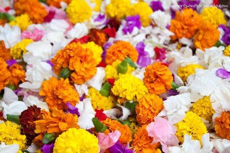flores-India-impresiones-del-mundo