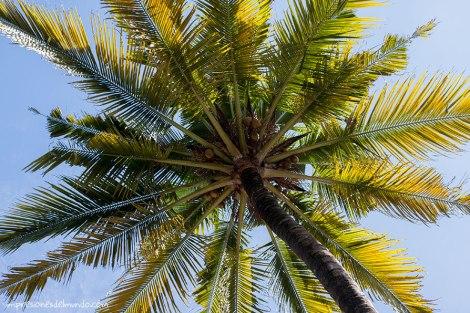 palmera-India-impresiones-del-mundo