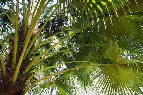 palmerales-India-impresiones-del-mundo
