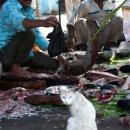 pescaderia-y-gato--Calcuta-impresiones-del-mundo