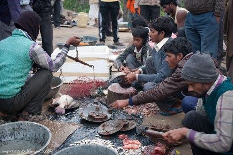 pescados-India-impresiones-del-mundo