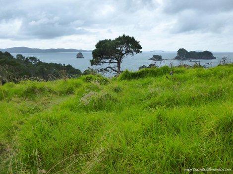arbol-Nueva-Zelanda-isla-norte-impresiones-del-mundo