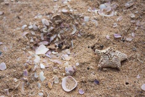 estrella-de-mar-Australia-impresiones-del-mundo