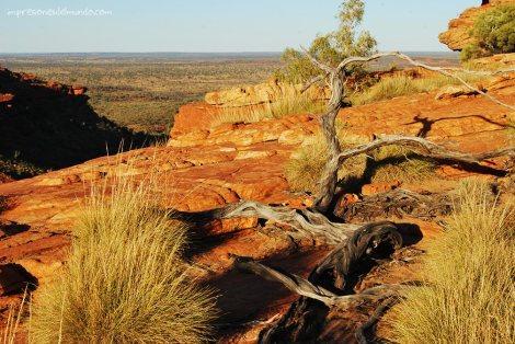 kings-canyon-arbol-australia-impresiones-del-mundo