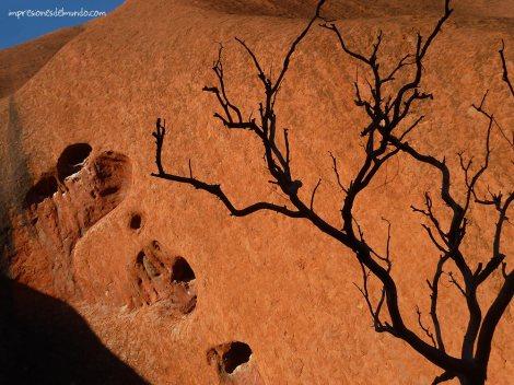 sombra-arbol-ayers-rock-australia-impresiones-del-mundo