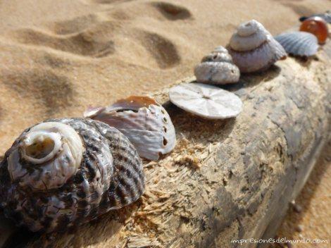 conchas-de-mar-Nueva-Zelanda-isla-sur-impresiones-del-mundo