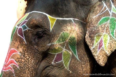 elefante-2-reflexiones