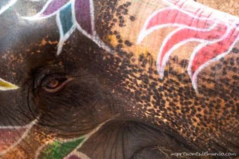 elefante-reflexiones