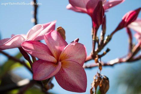 Flor-Mui-Ne-impresiones-del-mundo