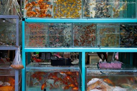 peces-fachada-Hue-impresiones-del-mundo
