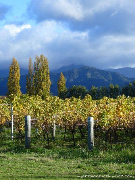 viñedos-Nueva-Zelanda-isla-sur-impresiones-del-mundo