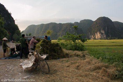 aplilando-arroz-barca-Tam-Coc-impresiones-del-mundo