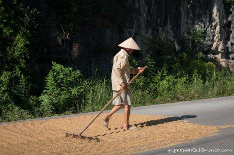 arroz-carretera-Tam-Coc-impresiones-del-mundo
