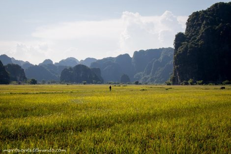 arrozal-Tam-Coc-impresiones-del-mundo