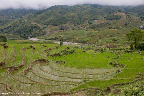 arrozales-2-Sapa-impresiones-del-mundo