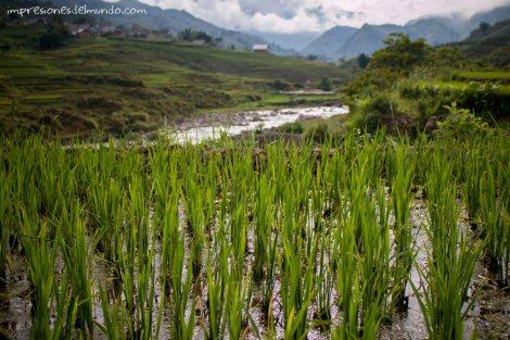 arrozales-3-Sapa-impresiones-del-mundo