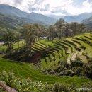 arrozales-Sapa-impresiones-del-mundo