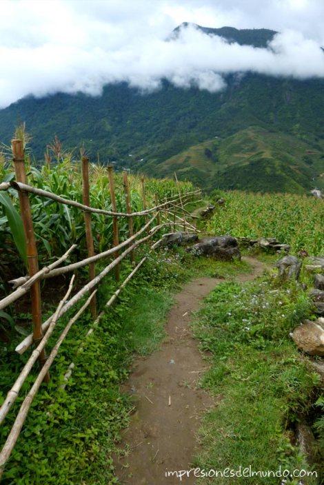 camino-entre-arrozales-Sapa-impresiones-del-mundo