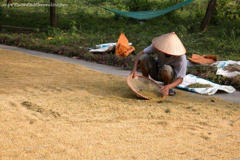 Colando-el-arroz-Tam-Coc-impresiones-del-mundo