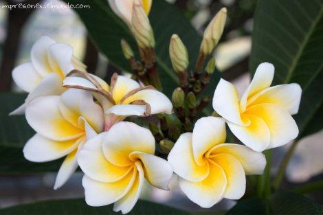 flores-Tam-Coc-impresiones-del-mundo