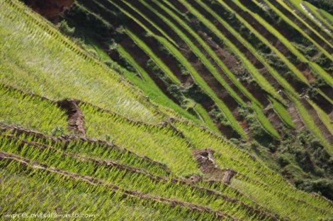 mar-de-arroz-Sapa-impresiones-del-mundo