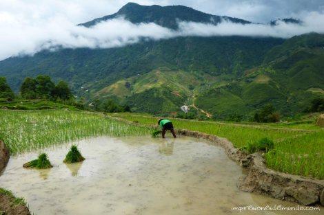 plantando-arroz-Sapa-impresiones-del-mundo