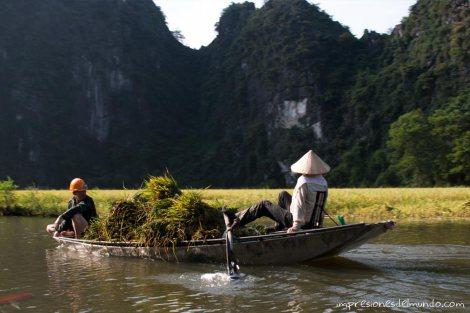 transportando-arroz-barca-Tam-Coc-impresiones-del-mundo