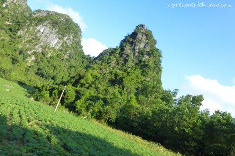 vegetacion-carretera-Cat-Ba-island-impresiones-del-mundo
