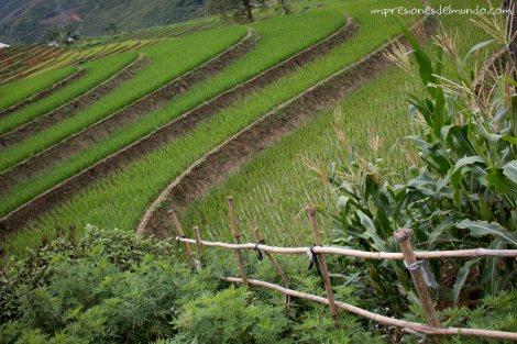 verja-y-arrozales-Sapa-impresiones-del-mundo