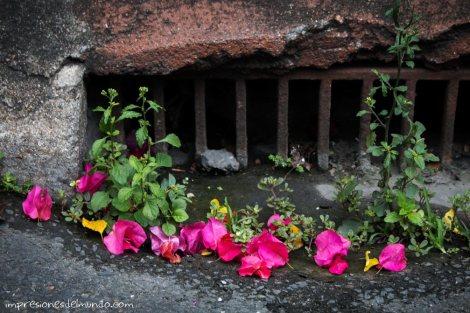 alcantarilla-y-flores-Chiang-Mai-Varanasi-Impresiones-del-mundo