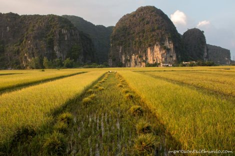 arrozales-Vietnam-impresiones-del-mundo