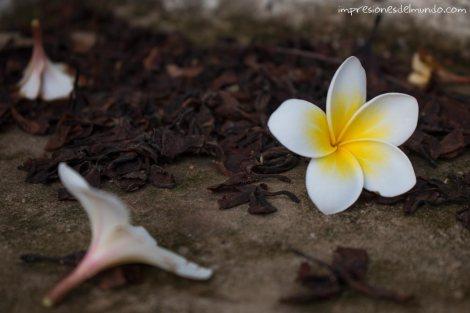flor-en-el-suelo-Nong-Khiaw-Laos-impresiones-del-mundo