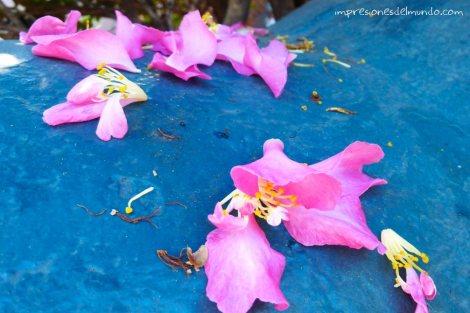 flores-Sydney-Impresiones-del-mundo